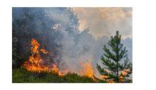 Baf'ta orman yangını