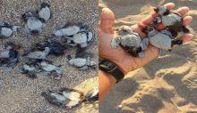 Antalya'da ATV ile carettaları öldürdüler!