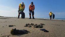 Akdeniz'deki petrol sızıntısı Suriye kaynaklı petrol sızıntısı Mersin sahillerine vurdu